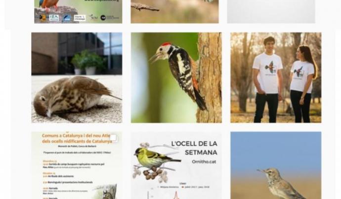 Els ocells són els protagonistes a les xarxes socials de l'Associació ICO Font: ICO
