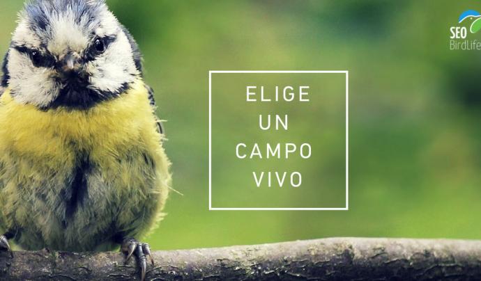 Seo BirdLife és una de les impulsores de la campanya Living Land