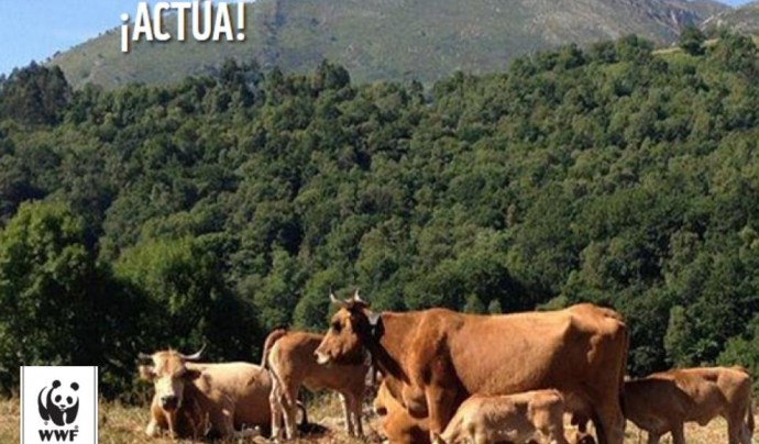 Les entitats critiquen que la PAC ha promogut l'agricultura industrial Font: WWF