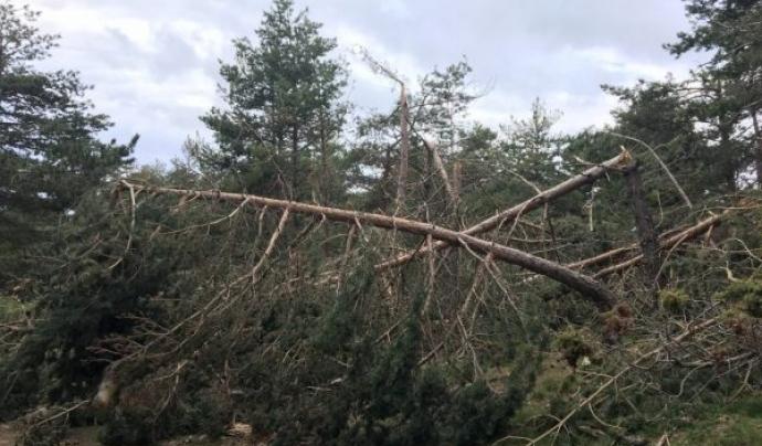 Les nevades poden provocar efectes negatius cap als boscos.  Font: Alerta Forestal