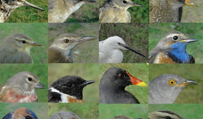 L'observació de les aus és una fascinant manera d'apropar-se al coneixement dels hàbitats, a la natura i les amenaces a les que està sotmesa. Font: Casa de l'Aigua de la Trinitat Nova