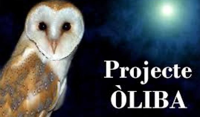 El Projecte Òliba estudia i afavoreix les poblacions d'òlibes amb participació ciutadana