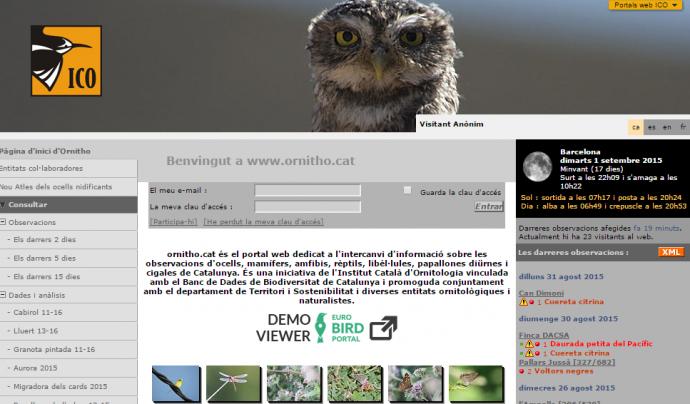 L'Associació Institut Català d'Ornitologia impulsa diversos projectes de voluntariat i ciència ciutadana