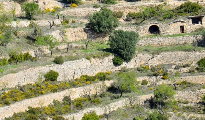 Paisatge de pedra seca a La Fatarella Font:  Àngels Pérez Tarragó