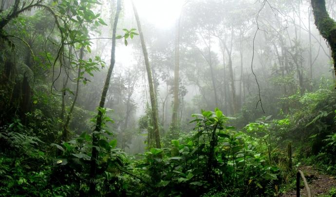 L'Amazònia és un punt estratègic per la lluita contra l'emergència climàtica.  Font: Llicència CC