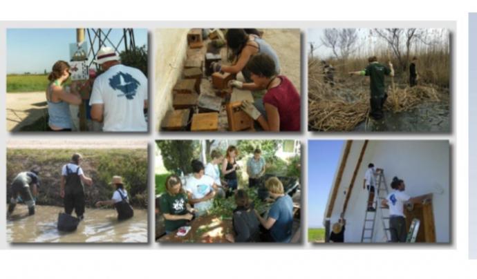 Els voluntaris i voluntàries ambientals s'impliquen en diversos tipus de tasques