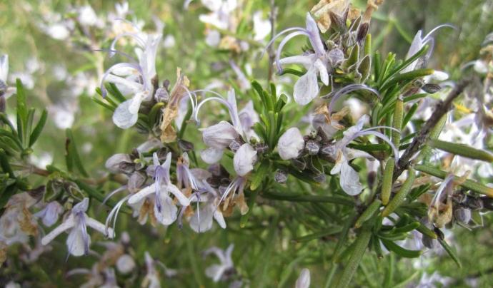 Les plantes poden tenir un ús alimentari, medicinal, simbòlic o ornamental