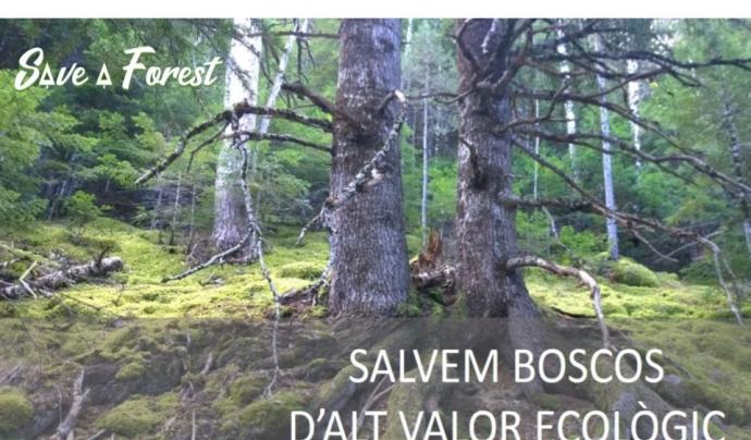 SaveaForest és una campanya de solidaritat per la natura impulsada des de l'Associació Selvans i Albert Bosch Font: Save A Forest