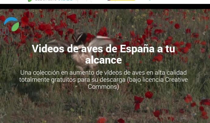 Seo Birdlife ofereix els vídeos com a recurs per la divulgació i la conservació de les aus Font: Seo Birdlife