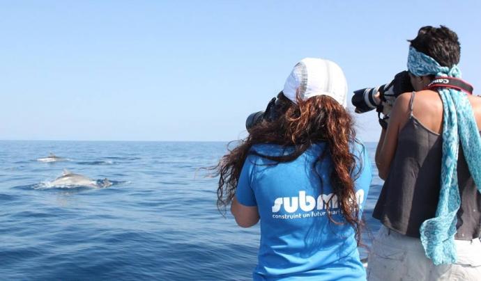 Submon realitza projectes de seguiment de fauna i flora marina, estudis de distribució, estimes de població i seguiment d'espècies protegides Font: Submon