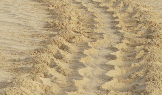 Els voluntaris i les voluntàries han de controlat l'aparició de rastres de tortuga en les platges Font: Caretta a la vista