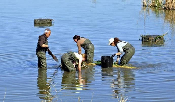 La participació en medi ambient es pot dur a terme a través de diverses formes de voluntariat ambiental. A la imatge, voluntariat a la reserva natural de Riet Vell amb SEO BirdLife.   Font: Riet Vell