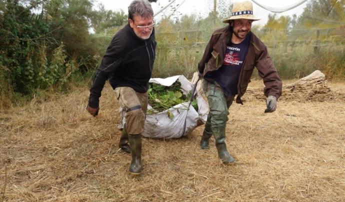 Voluntariat ambiental amb el Grup Natura Freixe