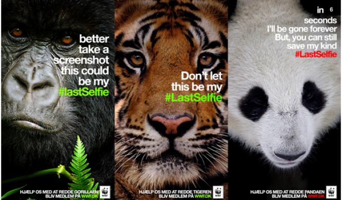 The #lastselfie, una campanya a les xarxes socials de WWF  Font: WWF