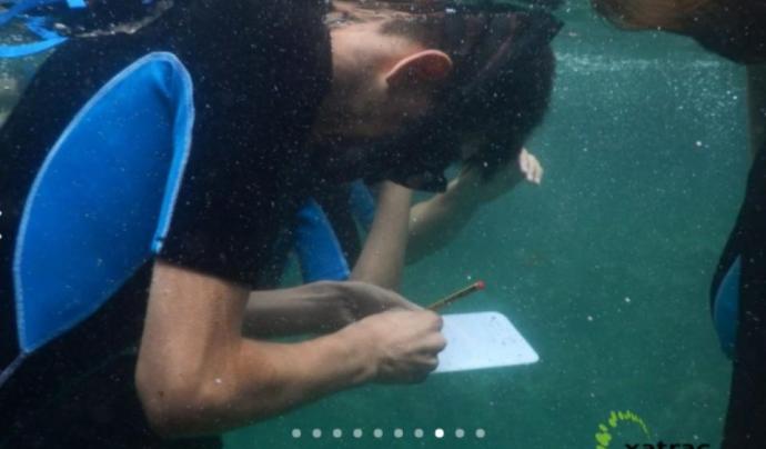 Els camps alternes immersions amb sessions formatives Font: Xatrac