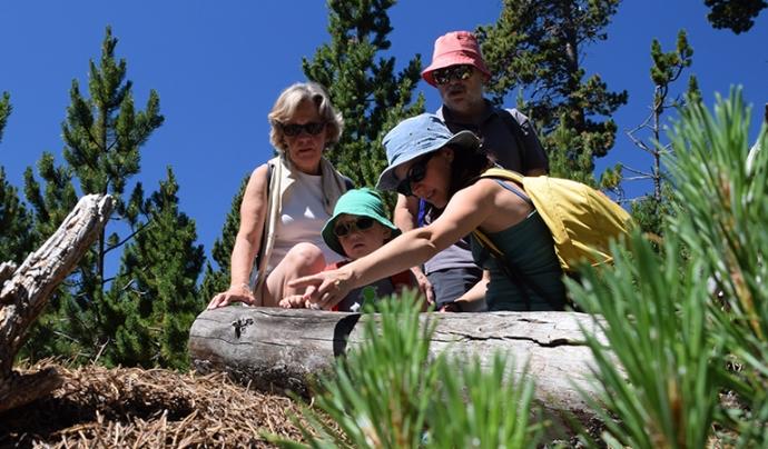 Una família observant un arbre caigut