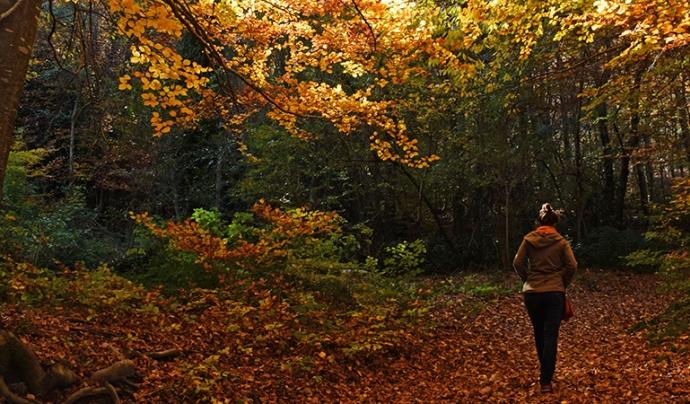 Una persona passejant pel bosc