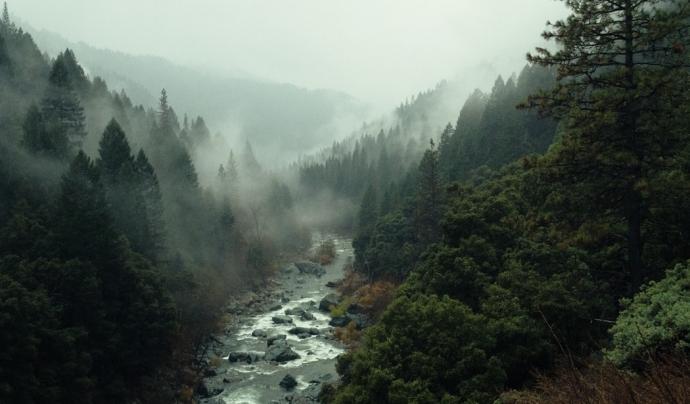 En termes psicològics, els boscos ajuden a crear un major benestar i un major confort. Font: Unsplash. Font: Font: Unsplash.
