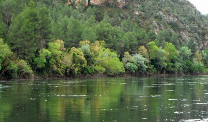 El bosc de ribera és el conjunt de vegetació que es forma al voltant dels rius. Font: Ebreibosc. Font: Ebreibosc