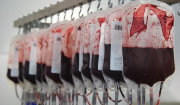Bosses de sang al laboratori del Banc de Sang i de Teixits.