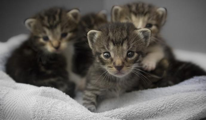 Des de principis d'any, s'han fet un total de 568 adopcions, 308 gossos i 260 gats. Font: Unsplash. Font: Font: Unsplash.