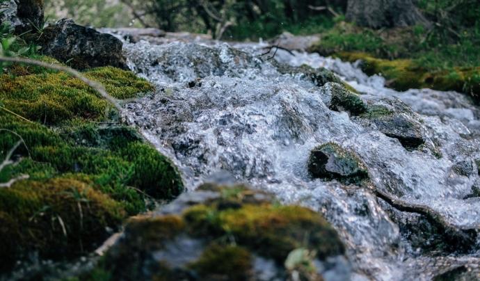 Una política ecofeminista de l'aigua posa al centre les necessitats de les persones i dels ecosistemes Font: Wirestock