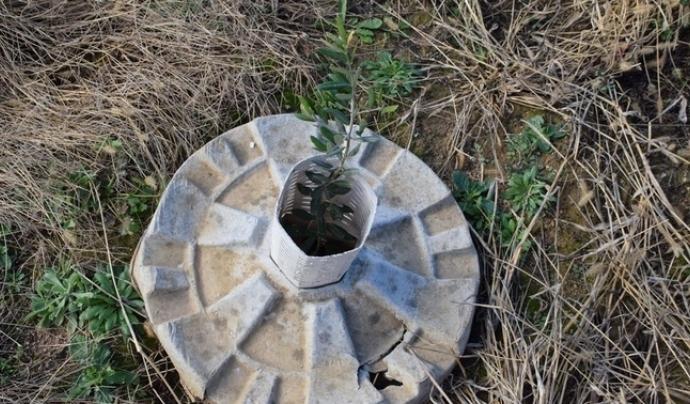 Dispositiu del dònut biodegradable Font: CREAF