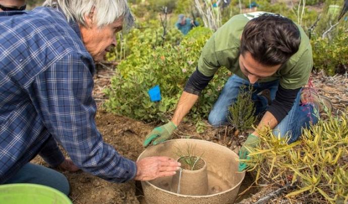 Plantació amb donut biodegradable 'cocoon' Font: Diario Palentino