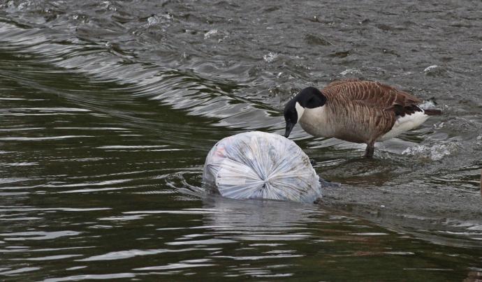 Contaminació microplàstica a les costes Font: CC