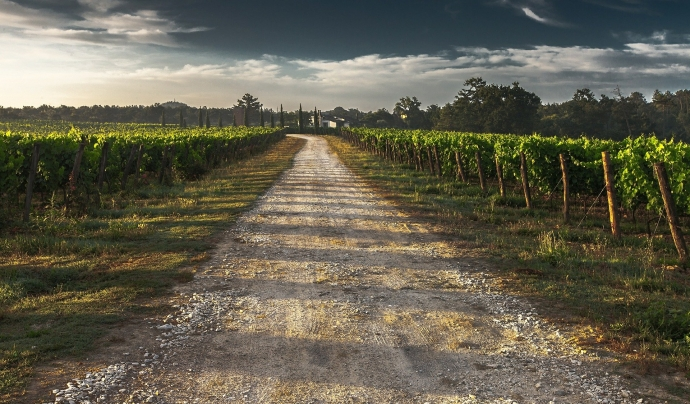 El portal ofereix tot tipus d'informació relacionada amb el món rural i el sector agrícola. Font: Pixabay