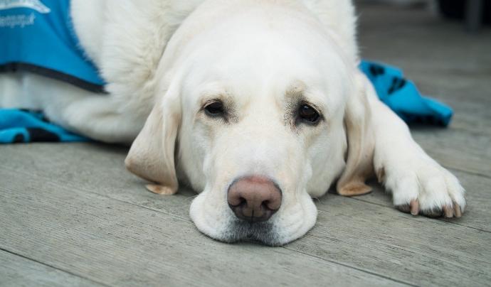 Entitats animalistes han fet una crida per mobilitzar-se a Barcelona per demanar l'entrega dels animals i el tancament permanent del laboratori denunciat. Font: Llicència CC