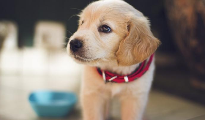 Les gosseres vulneren els drets dels animals. Font: Unsplash. Font: Font: Unsplash.