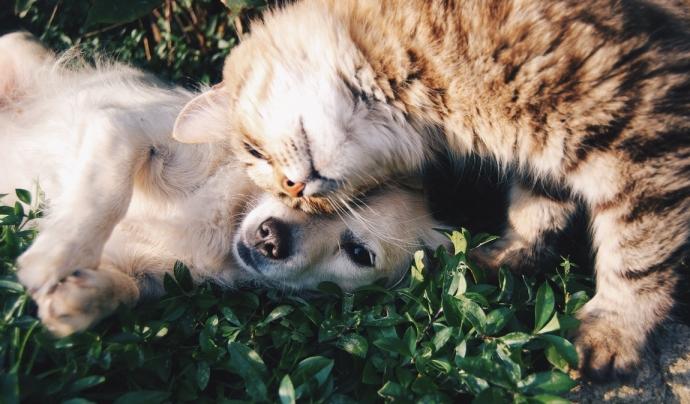 Tot animal acollit per l'home com a company té dret a viure conforme a la seva longevitat natural. Font: Unsplash. Font: Font: Unsplash.