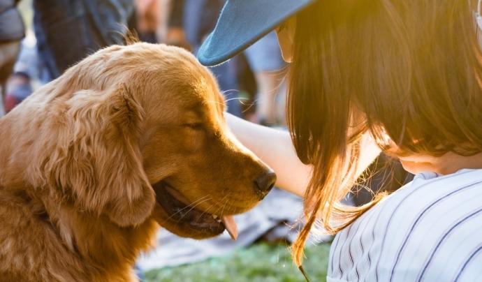 El centre d'acollida d'animals promouen les adopcions mitjançant programes generals de sensibilització. Font: Unsplash. Font: Font: Unsplash.