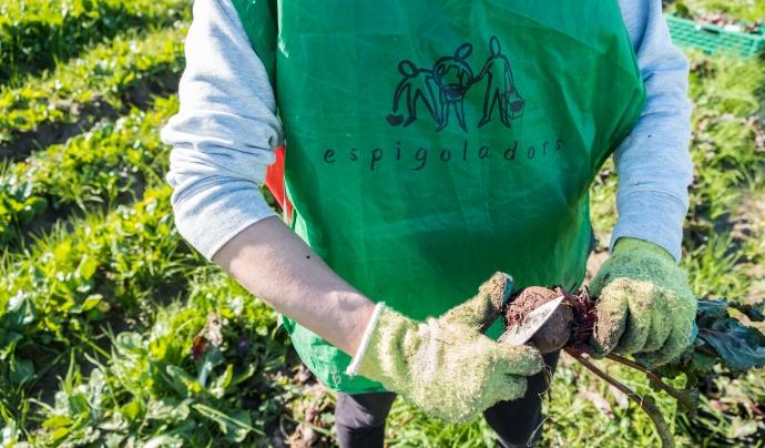 La Fundació Espigoladors és una empresa social que treballa per l'aprofitament alimentari d'una manera transformadora, inclusiva i innovadora. Font: Glòria Solans Font: Font: Glòria Solans.