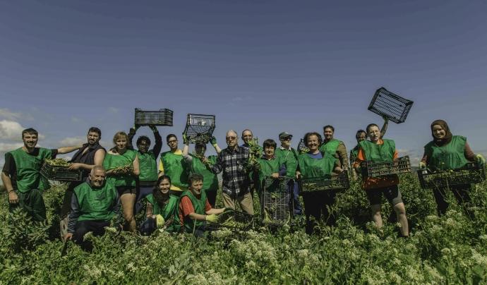 Amb l'ajuda de persones voluntàries es recuperen totes les fruites i verdures que els pagesos no han collit. Font: Rafael Coelho. Font: Font: Rafael Coelho.