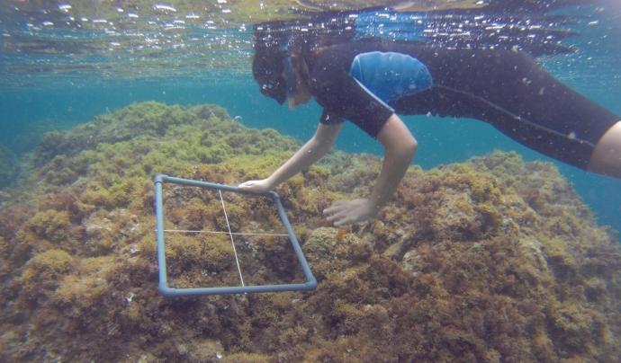 Les estades van dirigides a estudiants de biologia, ciències del mar i ambiental. Font: Xatrac. Font: Font: Xatrac.
