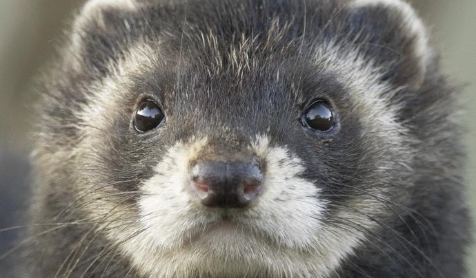 TuroCat Font: Eva Colomina/British Wildlife Centre