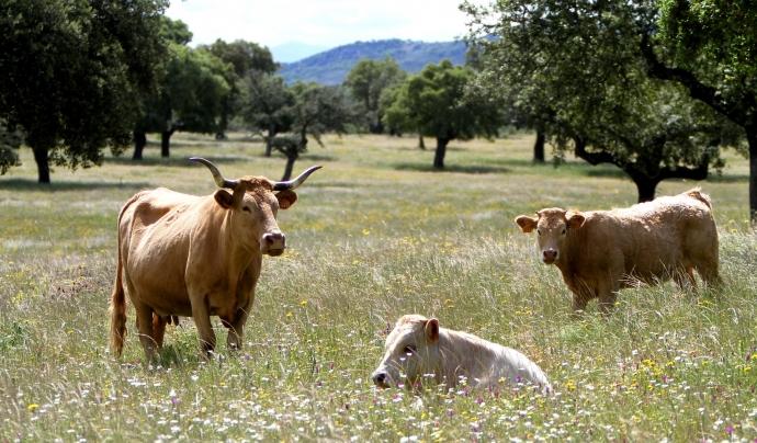 Les entitats demanen que els fons de recuperació europeus es destinin a una transició justa i sostenible del sistema agroalimentari. Font: Pixabay