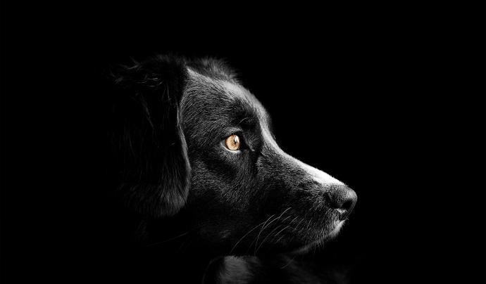 Altres països com França o el Regne Unit ja han prohibit la venda d'animals de companyia a botigues i per internet. Font: Llicència CC