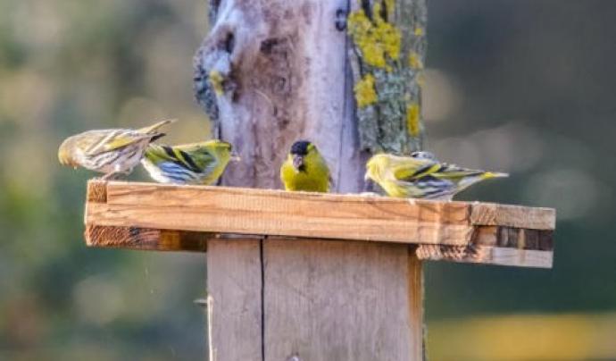 Menjadora d'ocells al Centre d'Educació Ambiental de Can Coll Font: Centre d'Educació Ambiental de Can Coll