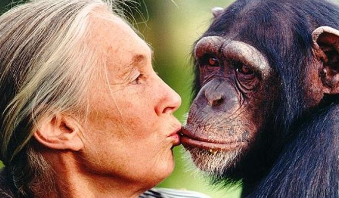 Goodall denuncia el negoci que hi ha amb el tràfic il·legal d'animals salvatges Font: Tiempo de viajar