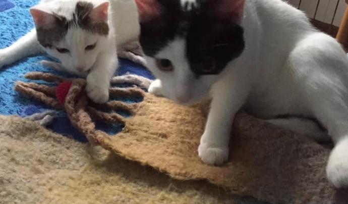 Gavà Gats, una nova entitat per la cura dels gats ferals de la zona, neix amb la voluntat de millorar el benestar d'aquests animals. Font: Gavà Gats