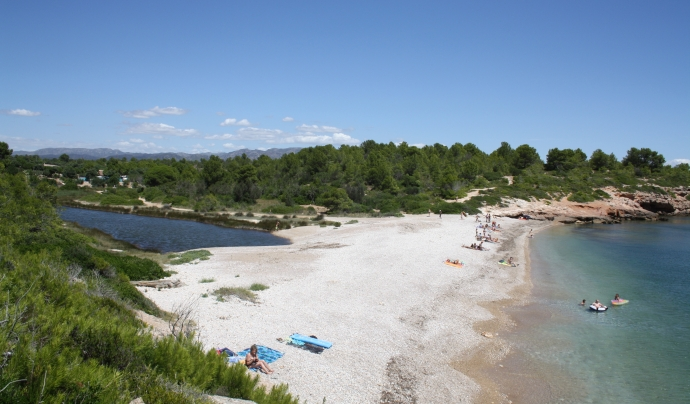 Graëllsia i l'Ajuntament de l'Ametlla de Mar han signar enguany un acord de custòdia marí Font: Graëllsia