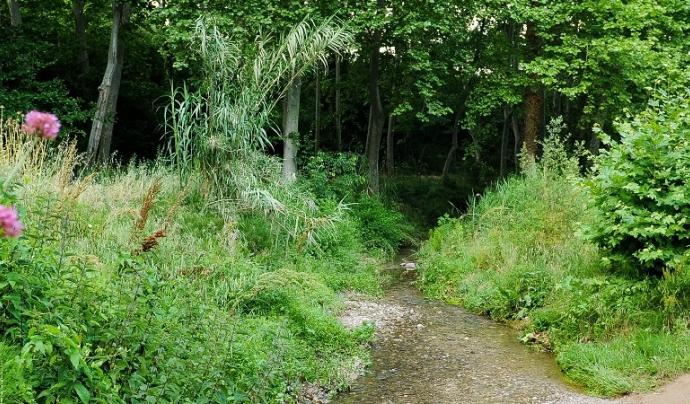 Bosc de ribera al torrent de la Betzuca (imatge: Sant Quirze Vallès Natura)