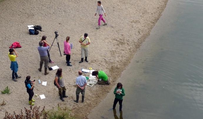 Voluntariat ambiental per la inspecció de La Muga a Castelló d'Empuries (imatge: Associació Hàbitats)