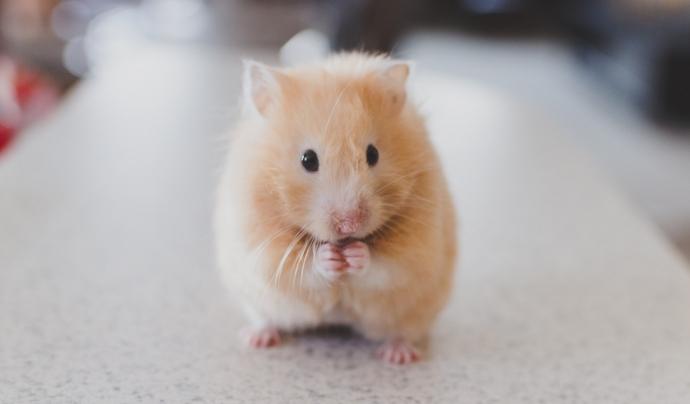 Existeixen mètodes alternatius com tècniques amb cèl·lules mare o cultius in vitro per no experimentar amb animals. Font: Unsplash. Font: Font: Unsplash.