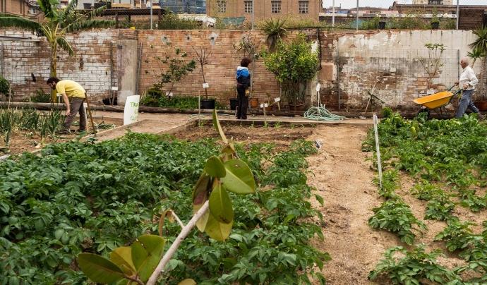 Els horts ja disposen de més de 700 metres quadrats. Font: Can Batlló. Font: Font: Can Batlló.