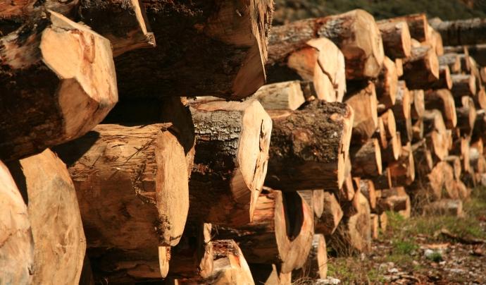 Troncs apilats després d'una jornada de treball / Font: Projecte Boscos de Muntanya