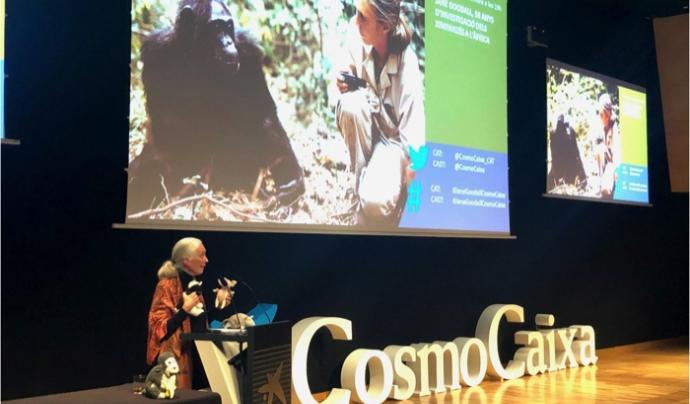 Goodal va venir a Barcelona a presentar la campanya 'Forever wild'. Font: Institut Jane Goodall